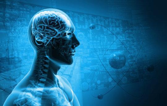 Prolonged antibiotic treatment might impact brain function.