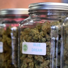 How US Federal Government Limits Valid Scientific Research On Marijuana