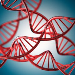 DNA analyses reveal genetic identities of world's first farmers