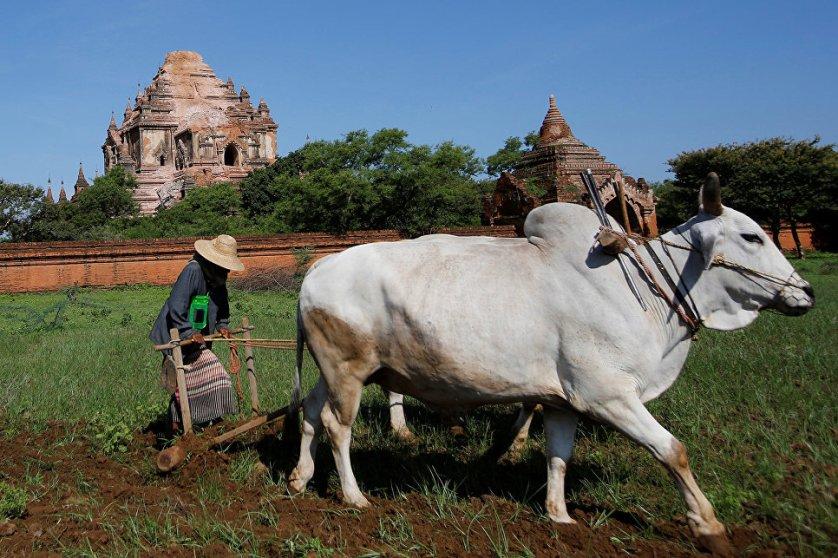 В результате землетрясения магнитудой 6,8, которое произошло в центральной части Мьянмы, в Пагане повреждены более 180 исторических памятников, в том числе такие всемирно известные строения, как буддийские храмы Дхаммаянчжи и Пхья Тхат Чжи.