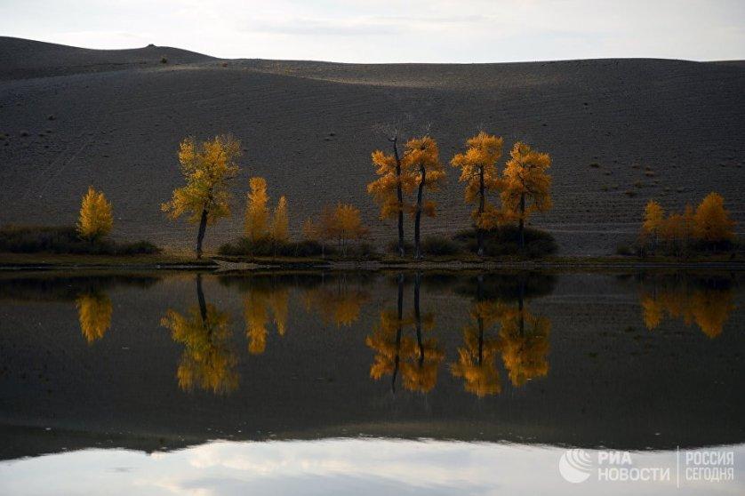 Осень на Алтае – это волшебные переливы желто-оранжевых оттенков.