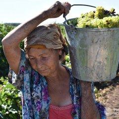 Wine making in Rostov ~