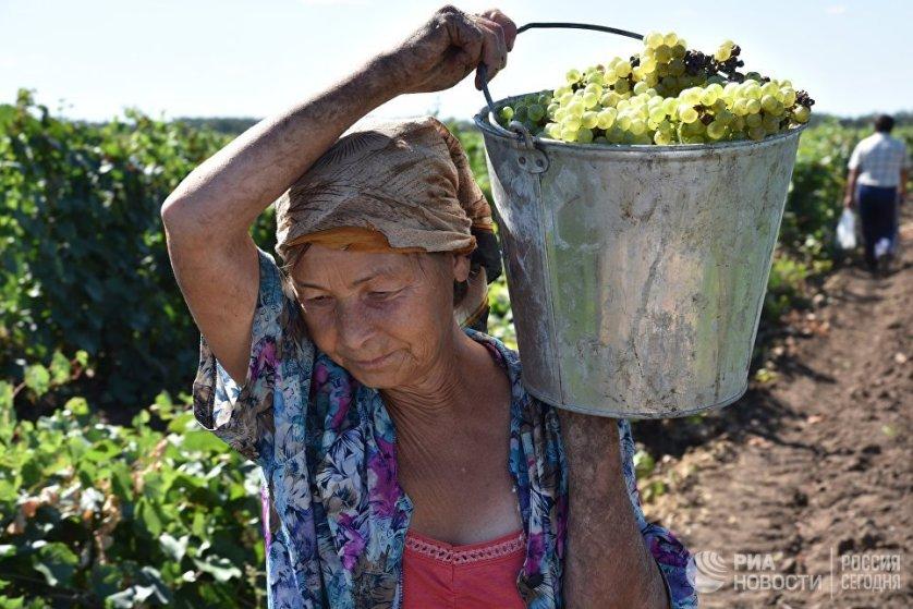 Когда из винограда получают сок, к нему добавляют дрожжи. К каждому сорту подбирают свои дрожжи, которые в будущем придадут вину свой определенный вкус, запах и оттенок.