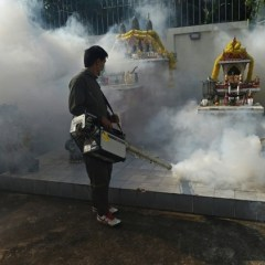 First Thai babies diagnosed with Zika-linked microcephaly