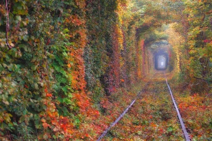 autumn-tunnel-of-love