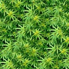 Эксперты выяснили, помогает ли марихуана заснуть