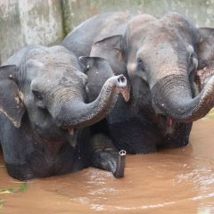 Elephants rescued from southwest China water tank