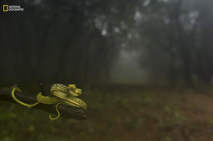 """Работа фотографа Varun Aditya """"Заманивая в лесную чащу""""."""