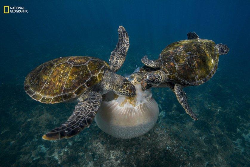 """Работа фотографа Scott Portelli """"Банкет из медузы""""."""