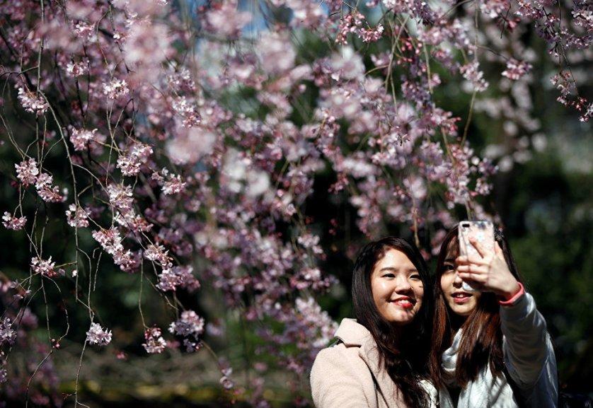 Девушки делают селфи на фоне цветущей сакуры в Токио, Япония.