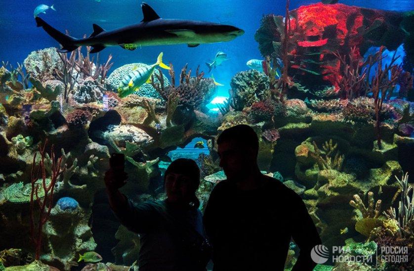 В океанариуме каждый посетитель может не только погрузиться в атмосферу волшебного окружения подводного мира, но и стать свидетелем шоу с акулами или тюленями.