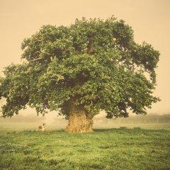 صور منوعة لأجمل الأشجار من أوروبا