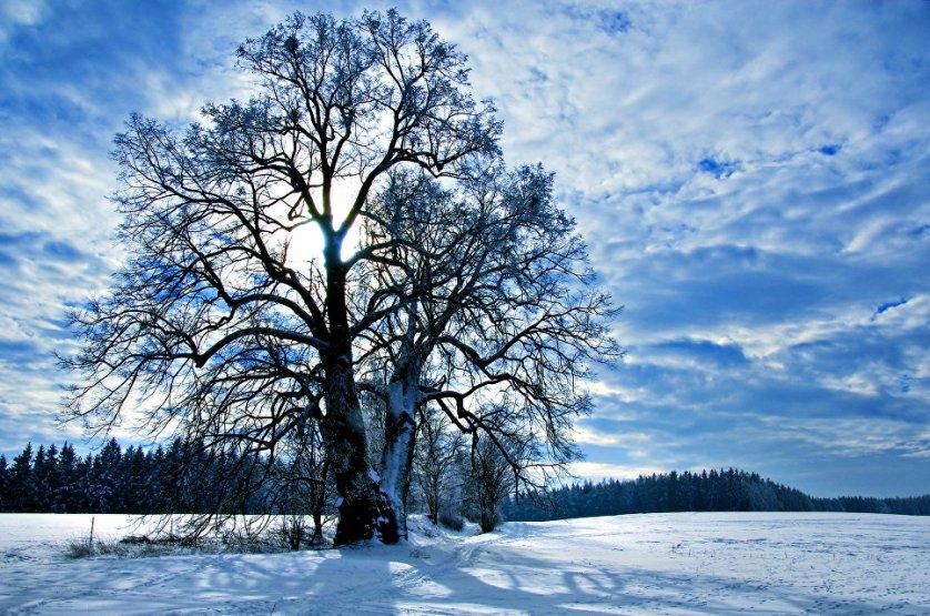 Третье место конкурса досталось 800-летней чешской липе, растущей в местечке Липка. Дерево стоит на дороге, соединяющей усадьбу, построенную в 13 веке, и древнее кладбище. Все эти столетия дерево провожало в последний путь всех хозяев этой усадьбы. Существует предание, что под кронами этого дерева разбивал свой лагерь национальный герой чешского народа Ян Жижка. Нынешние же местные жители уверены, что дерево приносит удачу влюбленным парам.