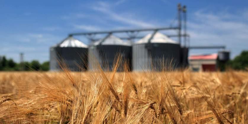 За прошедшую неделю из морпортов Краснодарского края было отгружено 455 тыс. тонн зерна