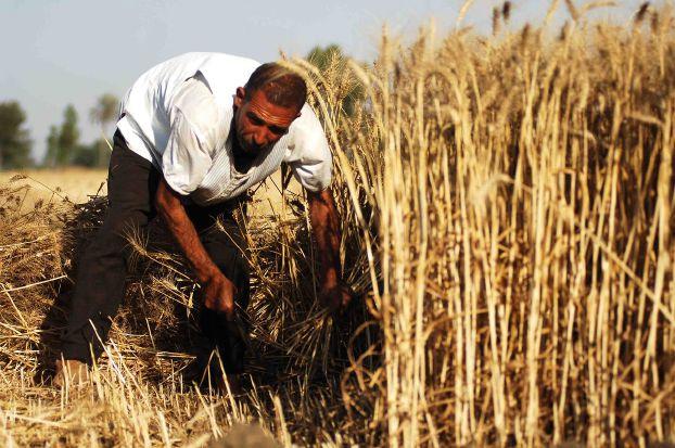 الزراعة تعزز النمو في المغرب