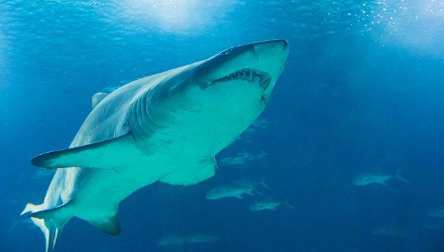 Французского борца с морскими хищниками съели акулы