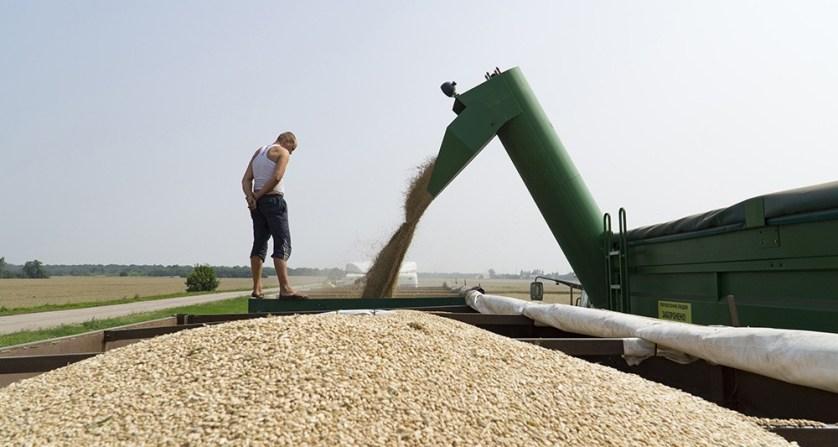 Как российское сельское хозяйство процветает под санкциями
