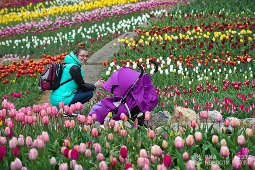 """Под десятый """"Парад тюльпанов"""" в саду отвели площадку из двух террас, общей площадью 1,3 тысячи квадратных метров."""