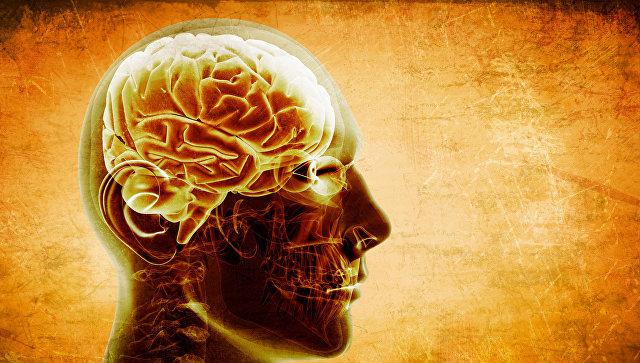 Ученые из России выяснили, что отличает мозг приматов и человека