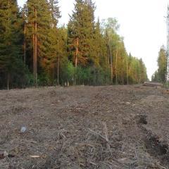 Законопроект о «лесной амнистии» принят в первом чтении