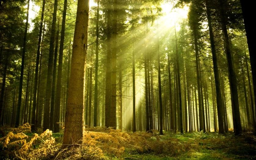 Новые правила санитарной безопасности улучшат состояние лесов
