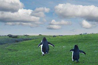 Ученые: Антарктида становится зеленее из-за изменений климата