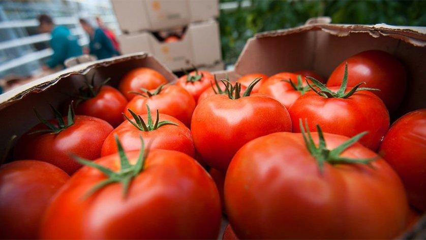 Замглавы МЭР: вопрос отмены запрета на ввоз томатов из Турции остается открытым