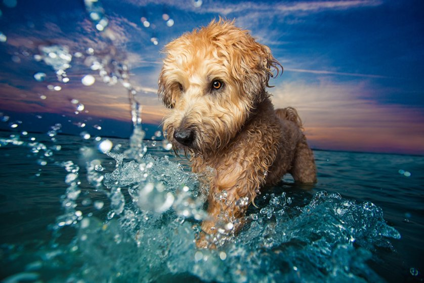 """Победитель в категории """"Собаки в игре"""" фотограф из США Кайли Грир. Снимок """"Брызги!""""."""