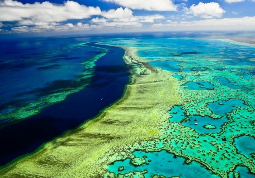 В 2100 году коралловые рифы погибнут