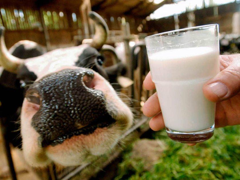 Глава Минпромторга оценил долю фальсификата на рынке молока в 20%