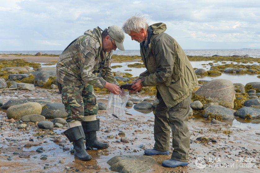 Начальник экспедиции Виктор Андрианов и научный сотрудник Андрей Лебедев собирают выбросы мазутно-песчаного агрегата в районе мыса Глубокий.