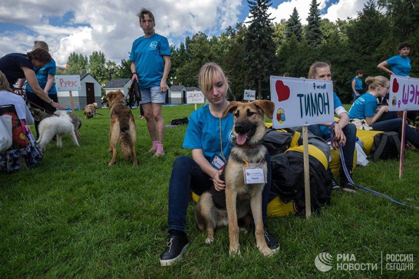 Во время фестиваля была организована выставка животных из московских приютов, которые могли в тот же день обрести новых хозяев.