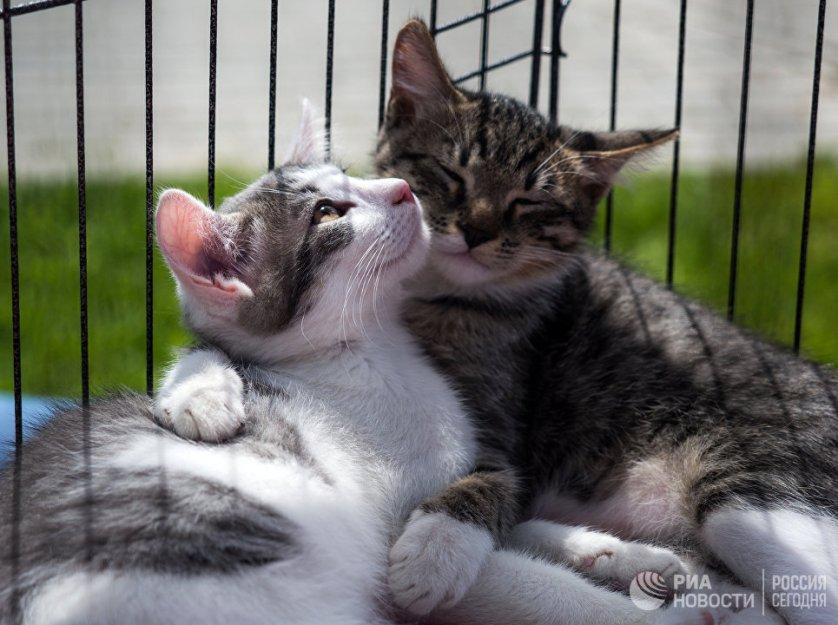 Среди приютских животных не редко встречаются породистые собаки и кошки, большинство из них уже когда-то имели свой дом, однако были выброшены на улицу людьми.