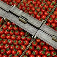 РФ и Турция в августе обсудят вопрос поставок турецких томатов