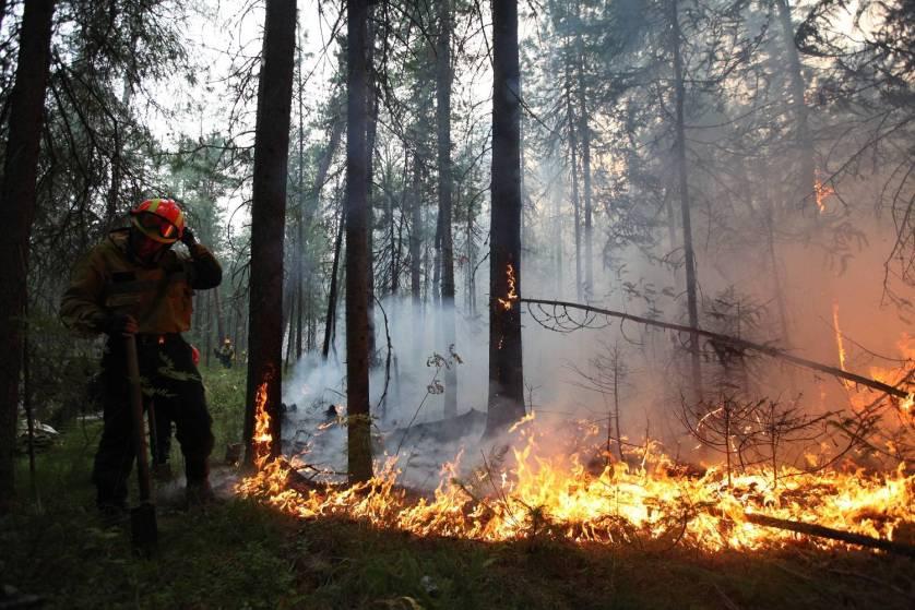 Около 20,5 тыс. га тайги выгорело в регионах Дальнего Востока за сутки