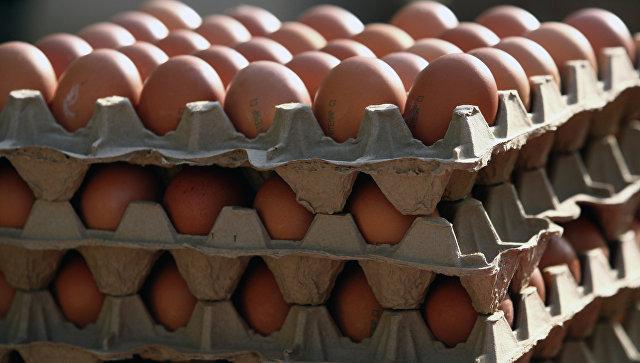 В Германии в 11 миллионах яиц нашли ядовитый химикат фипронил