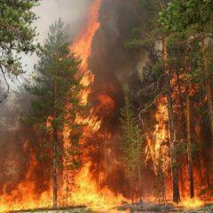 Лесные пожары на севере Иркутской области подошли к нефтяным вышкам