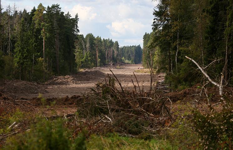 Передача «колхозных лесов» в лесфонд может спасти их от вырубки и пожаров