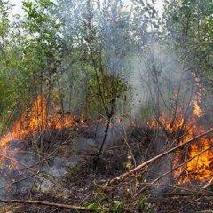 Два человека погибли в Волгоградской области в результате природных пожаров