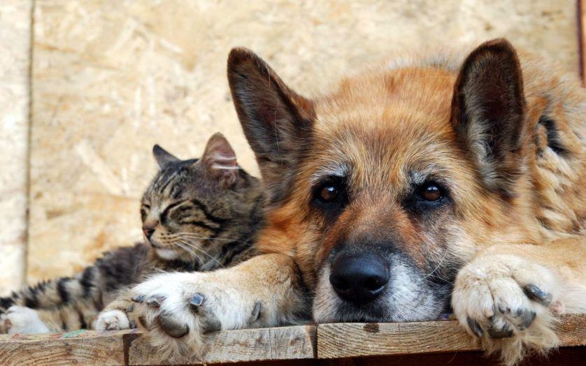 19 августа — Всемирный день бездомных животных