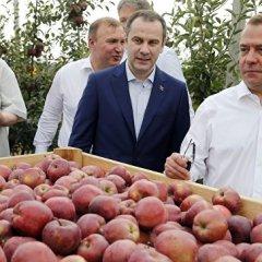 Медведев: урожай зерна в России достиг 117 миллионов тонн
