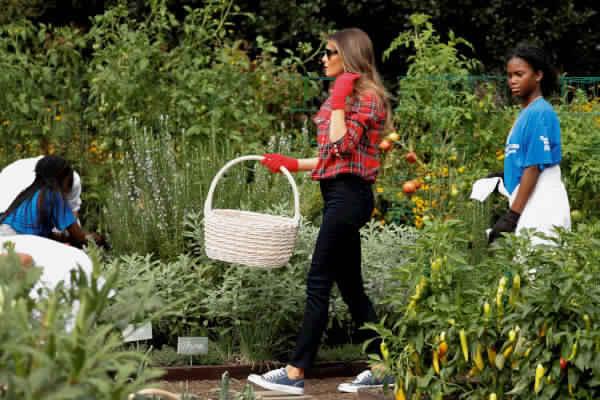 «ميلانيا ترامب» تزرع الفلفل والبامية بحديقة البيت الأبيض