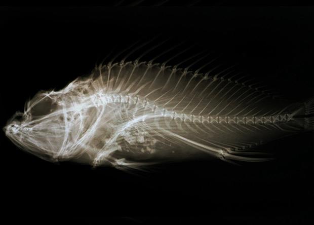 Геохимический анализ предсказал начало массового вымирания морских животных в 2100 году