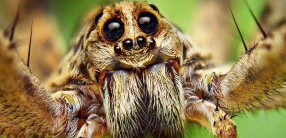 Ученые узнали шокирующие факты о пауках