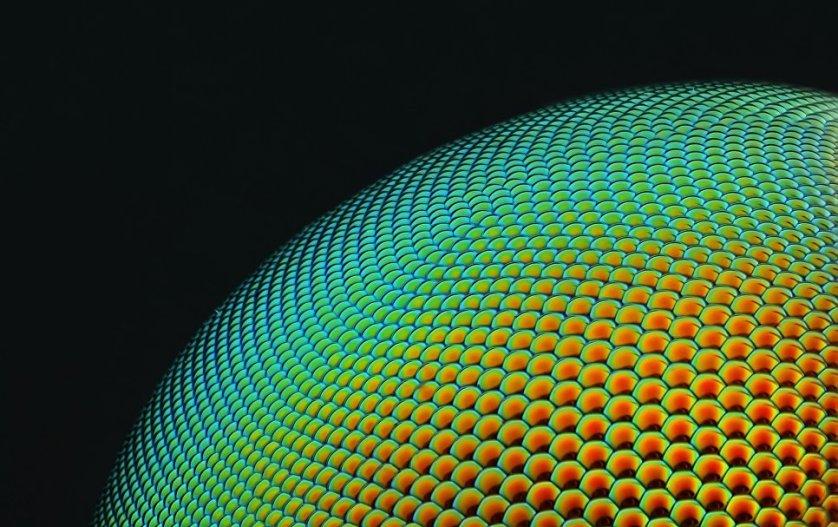 Снимок Юсефа Аль Хабши из Абу-Даби. На фото - часть одного из разделов глаза мухи, снятая с 20-кратным увеличением.