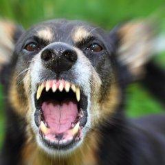 Южнокорейские собаки начали «мстить» своим владельцам