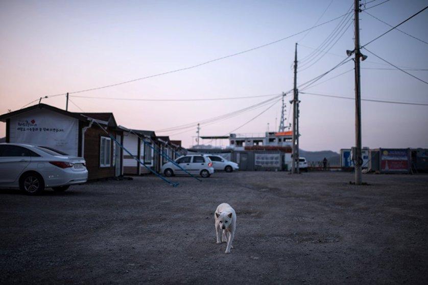 Собака на улице в Южной Корее