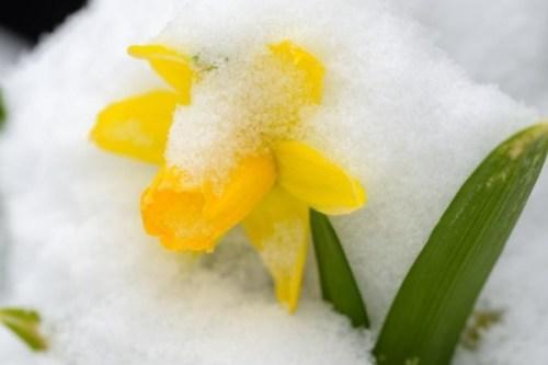 Синоптики рассказали о возвращении снега