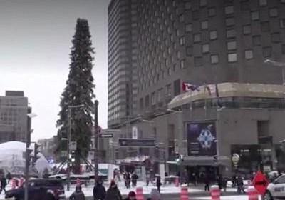 Уродливая рождественская ёлка в Монреале завела собственный Twitter