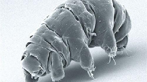 Ученые обнаружили «неубиваемое» животное